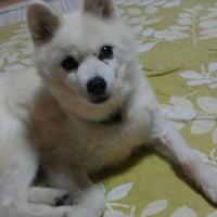 Photo taken at 犬の家 豊川インター店 by (๑°⌓°๑)と/か/ち/ん  . on 9/15/2011