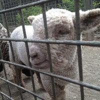Photo taken at Central Park - Tisch Children's Zoo by Maria S. on 4/12/2012
