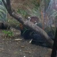 8/4/2012 tarihinde Andy O.ziyaretçi tarafından Red Panda Habitat'de çekilen fotoğraf