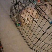 Photo taken at Puppy Playpen by Eric S. on 9/6/2011