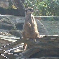 Photo taken at Allwetterzoo Münster by Денис Д. on 9/2/2012