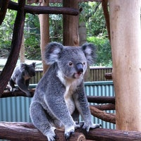 Photo taken at Lone Pine Koala Sanctuary by Gavin L. on 2/22/2012