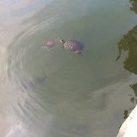 Photo taken at Central Park – Turtle Pond by Greta S. on 3/24/2012