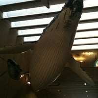 Photo taken at Queensland Museum Whale Mall by Graeme M. on 3/21/2011