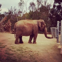 12/19/2011 tarihinde Daniel L.ziyaretçi tarafından Elephant Odyssey'de çekilen fotoğraf