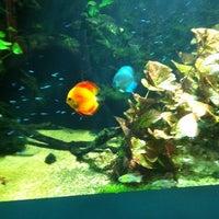 Foto scattata a Underwater World da Caleb D. il 11/15/2011