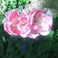 Photo prise au Queens Botanical Garden par Mr. Z. le5/10/2011