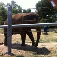 Photo taken at Dickerson Park Zoo by Mary Jane R. on 7/11/2011