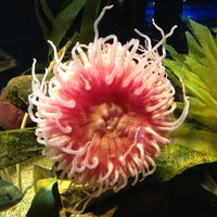 Foto tomada en Oklahoma Aquarium por Eagle N. el 2/15/2012