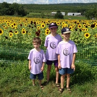 Photo taken at Lyman Orchards Sunflower Maze by Tracey H. on 8/8/2012