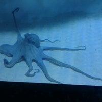 8/25/2012 tarihinde Esin K.ziyaretçi tarafından Antalya Aquarium'de çekilen fotoğraf