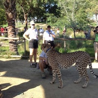 8/19/2012 tarihinde Andy W.ziyaretçi tarafından Cheetah Run'de çekilen fotoğraf