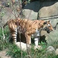 8/19/2012 tarihinde Tiffany W.ziyaretçi tarafından Indianapolis Zoo'de çekilen fotoğraf
