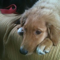 Photo taken at Savy Paws Pet Resort by Kevin M. on 7/18/2012