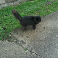 Photo taken at Black Cat Spotting by Chloe E. on 3/18/2012