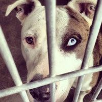 Photo taken at Baldwin Park Animal Shelter by Ari B. on 7/19/2012