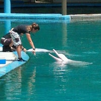 Photo taken at Underwater World And Dolphin Lagoon by Florentinus T. on 1/7/2012