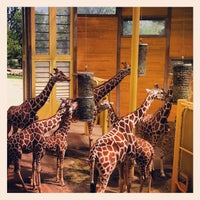 Photo taken at Giraffen by Micha on 6/17/2012