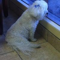 Photo taken at California Veterinary Specialists by Lynda V. on 12/9/2011