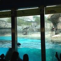 9/3/2012 tarihinde Vic R.ziyaretçi tarafından Indianapolis Zoo'de çekilen fotoğraf