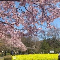 4/8/2012にayaco c.が蘆花恒春園 (蘆花公園)で撮った写真