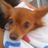 Photo taken at Rutherford Veterinary Hospital by Em S. on 7/7/2012