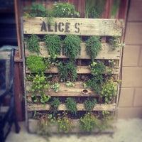 Alice's Arbor
