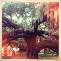 Photo taken at Safety Harbor Big Tree by brian s. on 9/10/2012