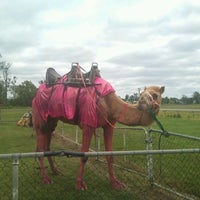 Photo taken at Monto Race Club by Lisa W. on 10/29/2011