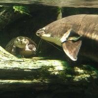 Photo taken at National Aquarium by Lindsay J. on 6/8/2012