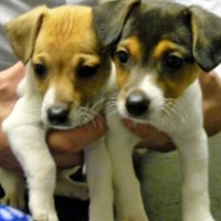 Photo taken at Vets4Pets by Karen E. on 9/12/2011