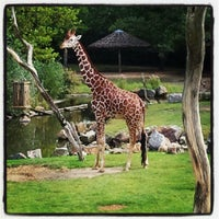 Photo taken at Giraffen by Debora d. on 8/9/2012
