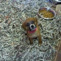 Photo taken at Atlanta Humane Society by Aunwan M. on 10/31/2011