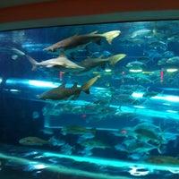 9/4/2012 tarihinde Rebeca F.ziyaretçi tarafından Golden Nugget Pool'de çekilen fotoğraf