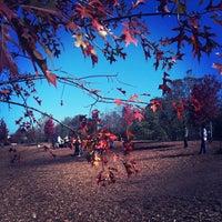 รูปภาพถ่ายที่ Piedmont Park Dog Park โดย Tommy B. เมื่อ 11/5/2011