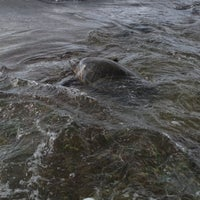 Foto tomada en Laniakea (Turtle) Beach por Marysol B. el 7/26/2012