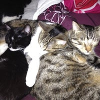 Photo taken at Kitty Palace by Lindsey W. on 4/3/2012