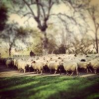 3/31/2012にAndrea M.がParco Regionale dell'Appia Anticaで撮った写真
