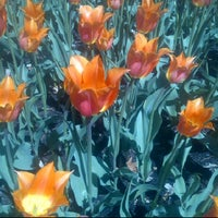 Photo taken at Tulip Festival Headquarters by Andres A. on 5/6/2012