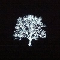 Photo taken at Magical Tree Of Lights by Anne E. on 12/28/2011