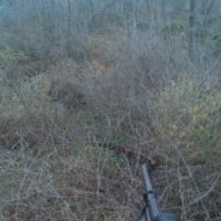 Photo taken at Tree Stand by Melanie N. on 11/30/2011