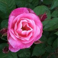 Photo taken at Norfolk Botanical Garden by Drew on 5/14/2011