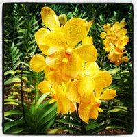Das Foto wurde bei National Orchid Garden von willai e. am 5/27/2012 aufgenommen