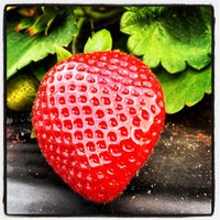 Photo taken at Pappy's Strawberry Patch by Christopher E. on 3/3/2012