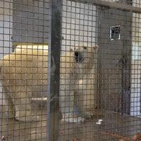 Photo taken at Polar Bear Odyssey At Como Park by AJ on 6/25/2012