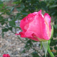 Photo taken at Promised Rose Garden by Jessica R. on 9/12/2011