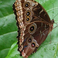 Photo taken at Cecil B. Day Butterfly Center by Jon-Michael D. on 9/4/2011