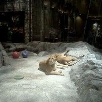 Mgm Grand Lion Habitat View 1