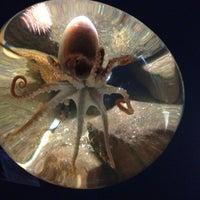Photo taken at Ilfracombe Aquarium by Luke D. on 7/8/2012