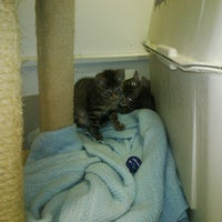 Photo taken at Ipswich Animal Shelter - Ipswich Humane Group by Josh G. on 6/12/2011